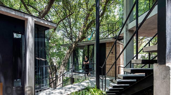 บ้าน ต้นไม้ the Woods